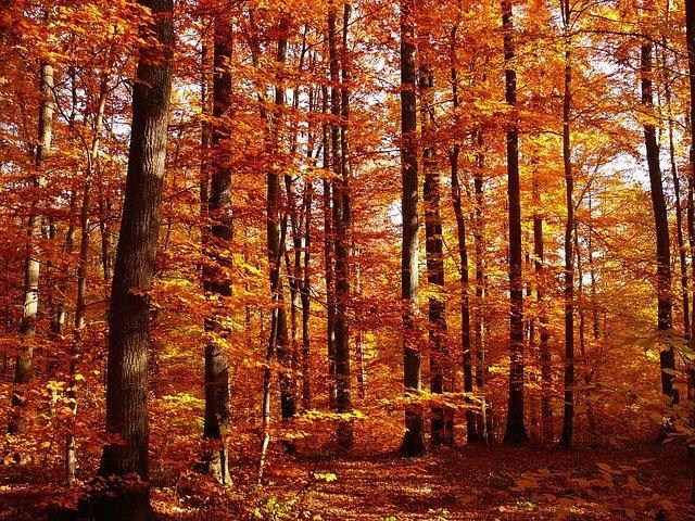 秋におすすめのお掃除
